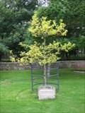 Image for Tyneham Millennium Tree - St Mary's Church, Tyneham, Dorset, UK