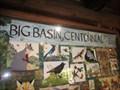 Image for Big Basin - 100 Years - Boulder Creek, CA
