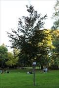 Image for Weltfriedensbaum im Stadtpark - Wien, Austria
