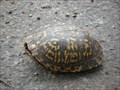 Image for Box Turtle Crossing - Belleville, Illinois
