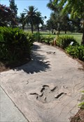Image for Dinosaur Trackway
