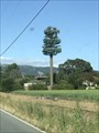 Image for San Martin Tree - San Martin, CA
