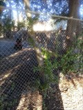 Image for Jollyman Tree Fence Eating Tree - Cupertino, CA