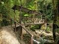 Image for Podocarpus National Park - Zamora, Ecuador
