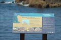 Image for Asilomar State Marine Reserve - Pacific Grove California