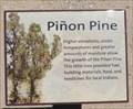 Image for Piñon Pine - Baker, CA