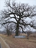 Image for Witness Tree - Bureau County, IL