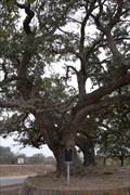 Image for Urrea Oaks - Refugio, TX