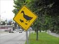 Image for Duck crossing, Roberts Lake - Seaside, California