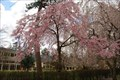 Image for Sister Mary Grace Burns Arboretum, Lakewood, NJ