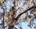 Image for Jelks Preserve - Venice, Florida, USA