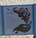 Image for Giant Kelp  -  Pebble Beach, CA