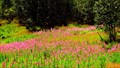Image for Hanna Creek Flower Fields - Trail, BC