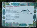 Image for Long-Nosed Bandicoot - Bradleys Head, Mosman, NSW, Australia