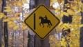 Image for Horse riding crossing - Parc régional éducatif Bois de Belle-Rivière