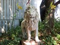 Image for Small Lion, The Wild Animal Sanctuary - Keenesburg, CO