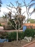 Image for D'Errico Tree - Florida Botanical Gardens - Largo, FL