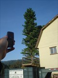 Image for Cell Tower Tree behind WestWind Barn, Los Altos Hills, Ca