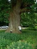 Image for Ambrosius Oak