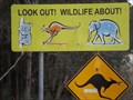 Image for Look Out! Wildlife !?! Grassy Head turn-off, NSW, Australia