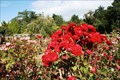 Image for Henry Edginton Rose Garden — Invercargill, New Zealand