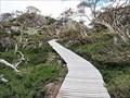 Image for Snow Gums Boardwalk. Kosciuszko National Park. NSW. Australia.