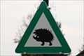Image for Hedgehog Crossing / Igel-Kreuzung - Langenlebarn, Austria