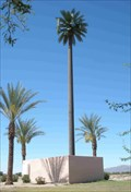 Image for Talking Palm Tree - Bell & Sarival
