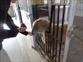 Image for Feeding the Farm Animals at Happy Hollow  -  San Jose, CA