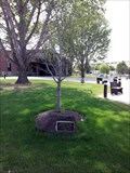 Image for Sister City Tree - Madras, OR