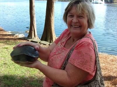 Turtle Crossing - Lake Eola