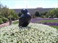 Image for Labrador Duck  -  Washington, DC