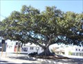 Image for Proclamation Tree and Marmion Memorial, Adelaide St, Fremantle, WA, Australia