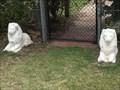 Image for Lions - Emmaville, NSW, Australia