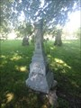 Image for Shaw - Cataraqui Cemetery - Kingston, ON