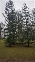 Image for Jeunes sequoias sempervirens à l'arboretum de la Citadelle - Namur - Belgique