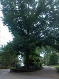 Image for Tree That Owns Itself - Athens, GA
