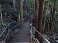 Image for The Slot Gorge Boardwalk - Minnamurra Rainforest, Jamberoo, NSW