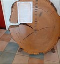 Image for Tree growth rings - Batavialand - Lelystad - the Netherlands
