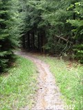 Image for Seneca Creek Trail - Seneca Creek Backcountry - Monongahala National Forest - Western, West Virginia