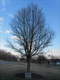 Image for Ronald M. Mayercik Memorial Tree - Cherry Hill, NJ