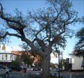 Image for The Live Oaks at Toomer's Corner in Auburn, AL