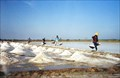 Image for Salt Farm -  Samut Sakhon, Thailand