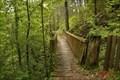 Image for Le pont de la forêt Jean Giono