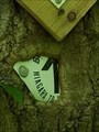 Image for Omniverous Tree - Bruce Trail - Dundas, Ontario