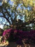 Image for Lobo Street Treehouse - San Juan Capistrano, CA