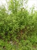Image for TB 2111-28.0 Lipina