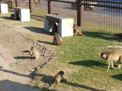 The Lopburi monkeys are tame compared to other monkeys I have encountered in south-east Asia.
