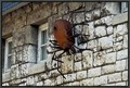 Image for Spider on the wall - Ulm, BW, Germany