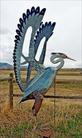 Image for Great Blue Heron - Drummond, Montana